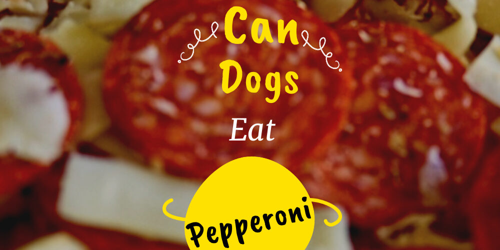 Copy of Can Dogs Eat Pepperoni