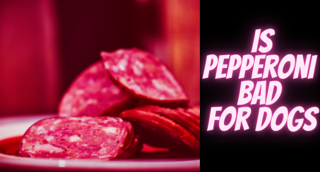 Is Pepperoni Bad for dogs