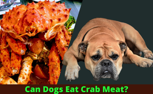 Can Dogs Eat Crab Meat