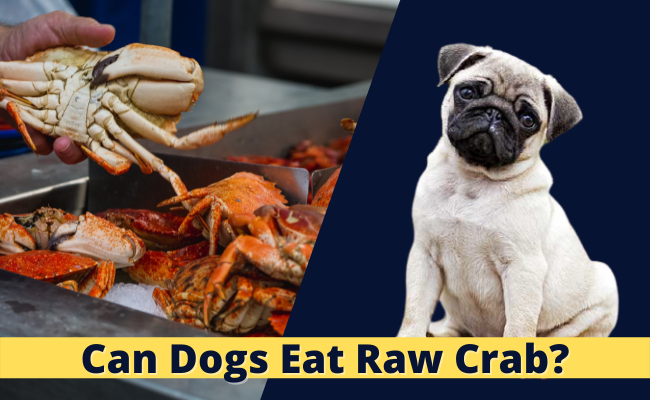 Can Dogs Eat Raw Crab