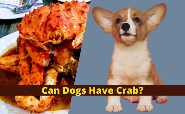 Can Dogs Have Crab