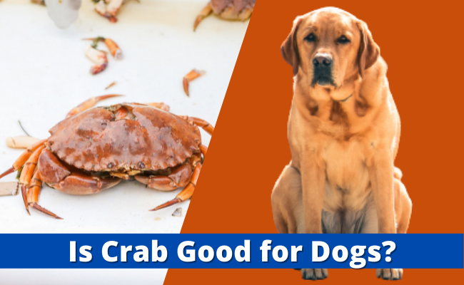 Is Crab Good for Dogs