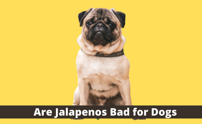 Are Jalapenos Bad for Dogs