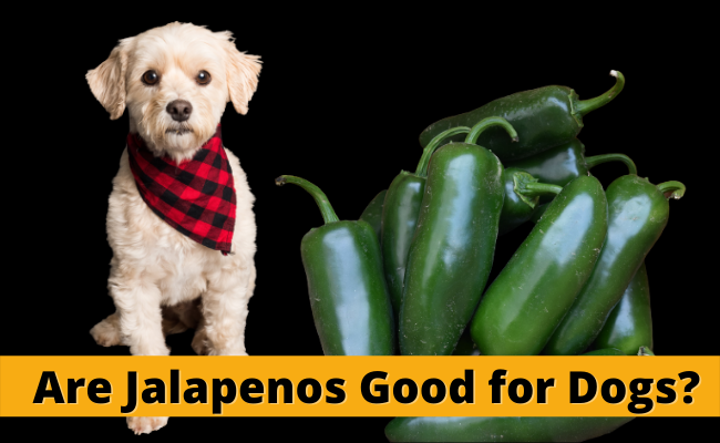 Are Jalapenos Good for Dogs