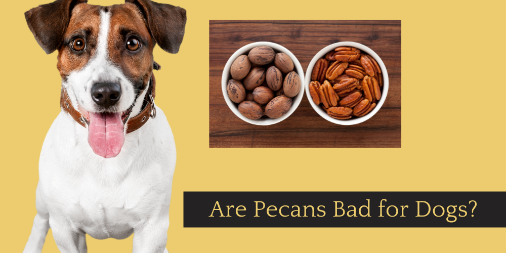 Are Pecans Bad for Dogs