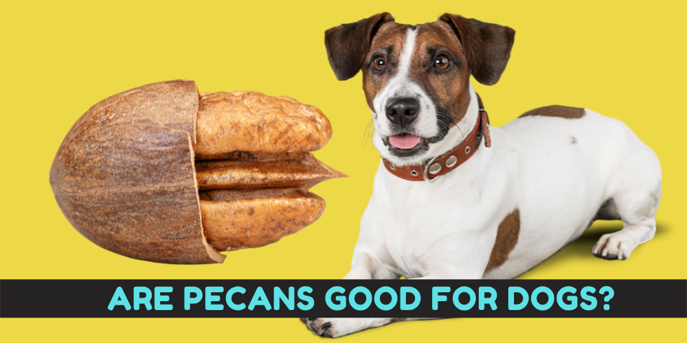 Are Pecans Good for dogs
