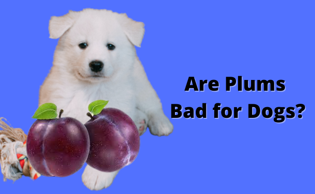 Are Plums Bad for Dogs