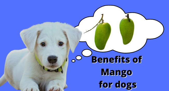 Benefits of Mango For Dogs