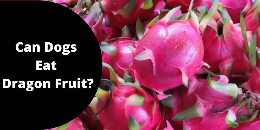 Can Dogs Eat Dragon Fruit