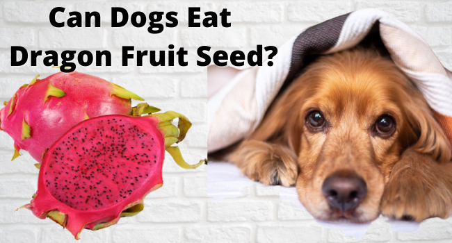 Can Dogs Eat Dragon Fruit Seeds