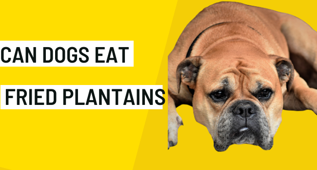 Can Dogs Eat Fried Plantains