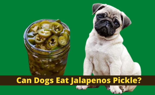 Can Dogs Eat Jalapenos Pickle