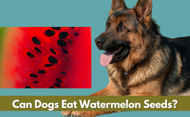 Can Dogs Eat Watermelon Seeds