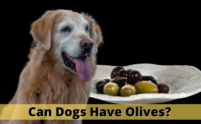 Can Dogs Have Olives