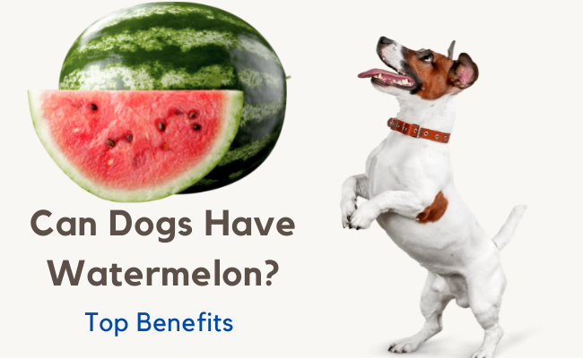 Can Dogs Have Watermelon