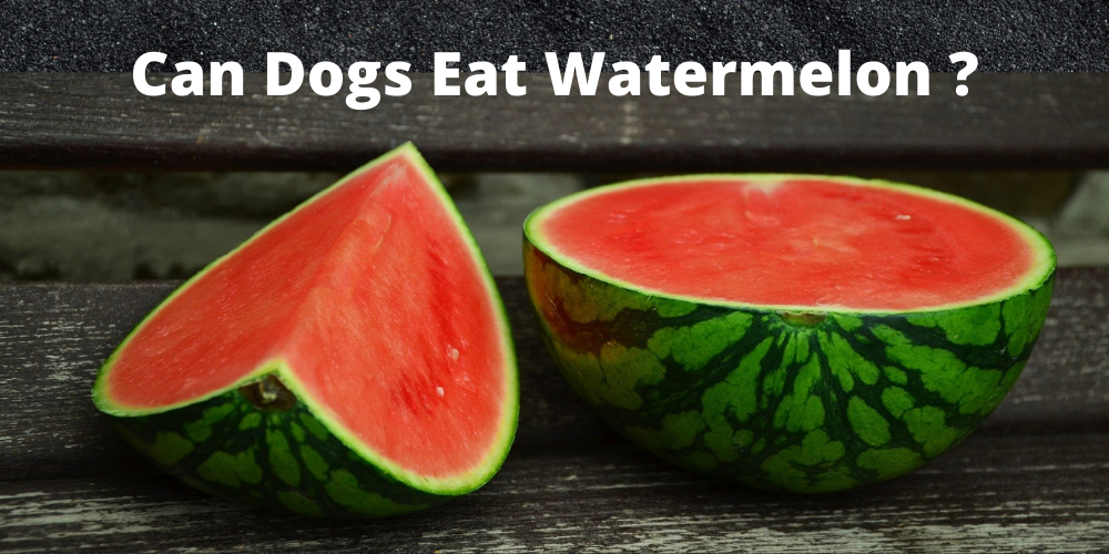 Copy of Can Dogs Eat watermelon