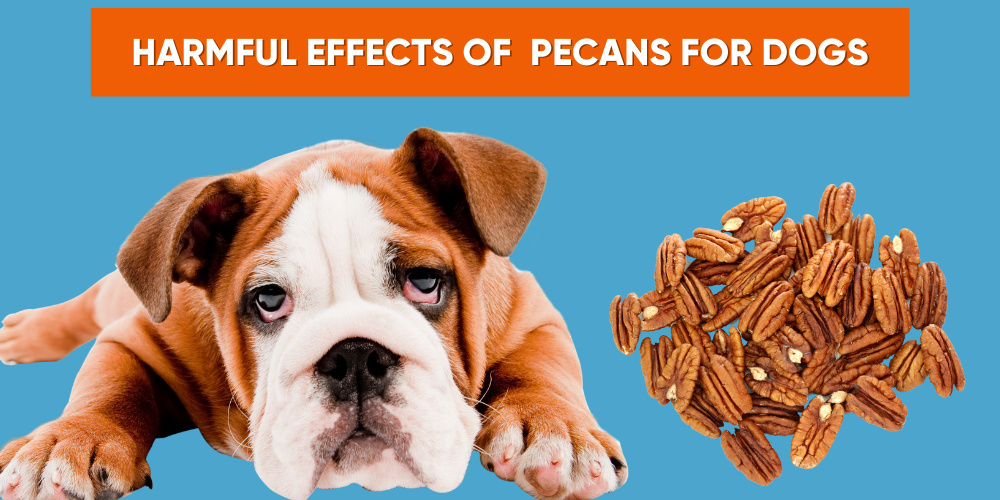 Can Dogs Have Pecans