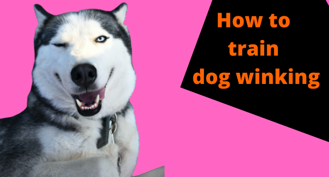 why do dogs wink at you