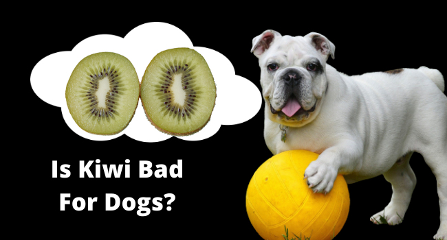 Is Kiwi Bad For Dogs