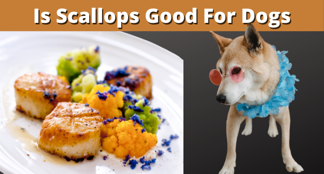Is scallops good for dogs