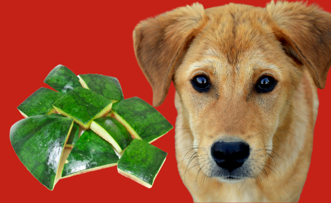 Can Dogs Eat Watermelon Rinds