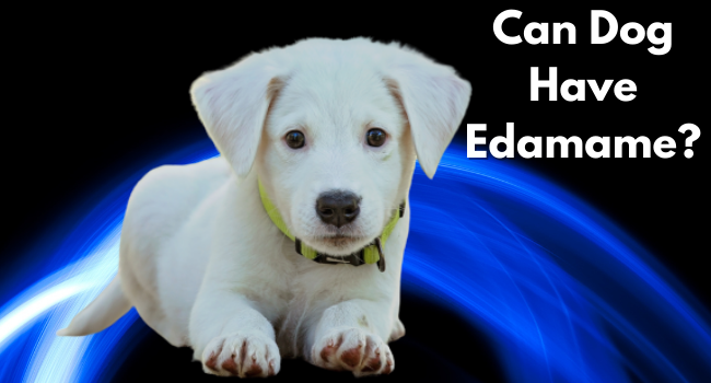can dogs have edamame