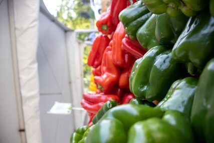 Can Dogs Eat Red Bell Peppers | Can Dogs Eat Green Bell Peppers