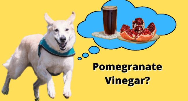 can dogs eat pomegranate vinegar