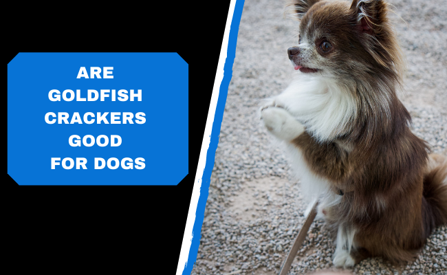 Are Goldfish Crackers Good For Dogs