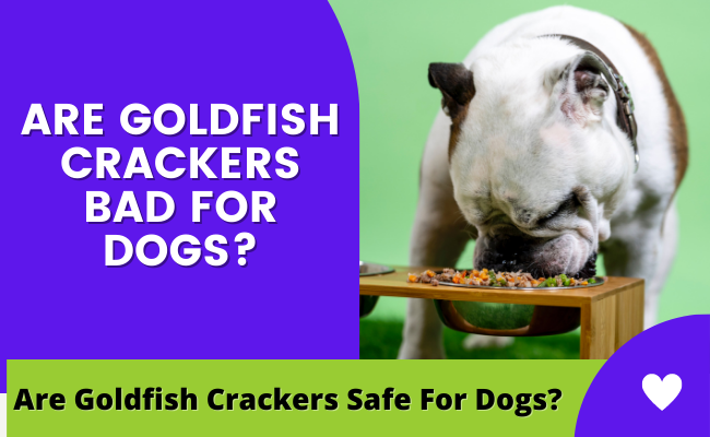 Are Goldfish crackers bad for dogs