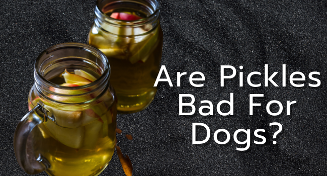 Are Pickles Bad For Dogs