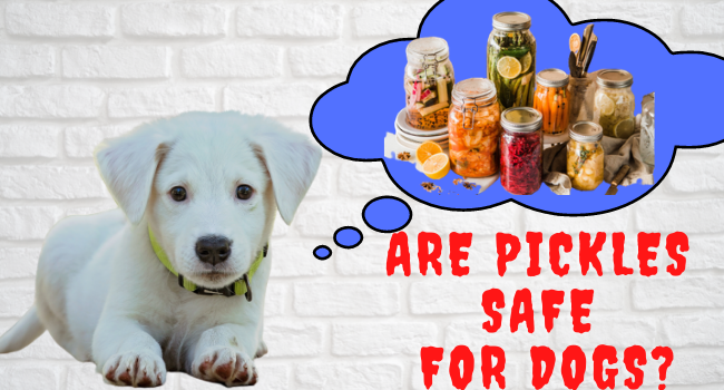 Are Pickles Safe for dogs