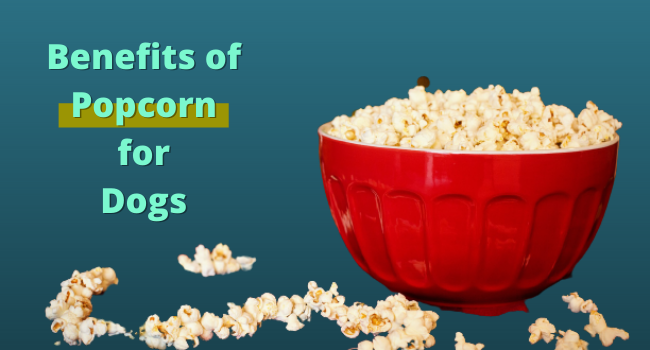 Benefits of popcorn for dogs