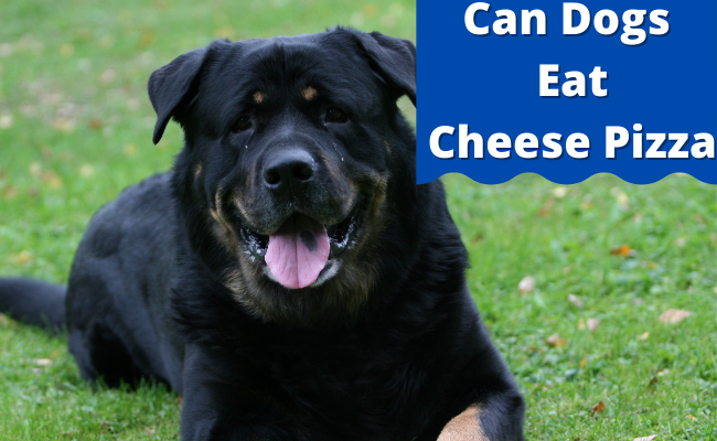 Can Dogs Eat Cheese Pizza