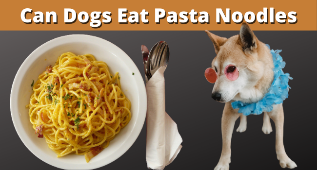 Can Dogs Eat Pasta Noodles