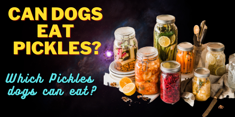 Can Dogs Eat Pickles