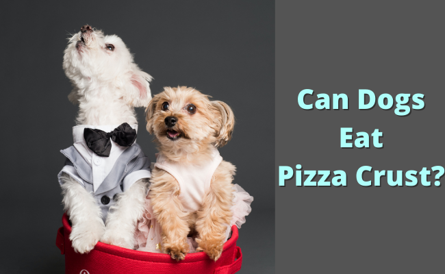 Can Dogs Eat Pizza Crust