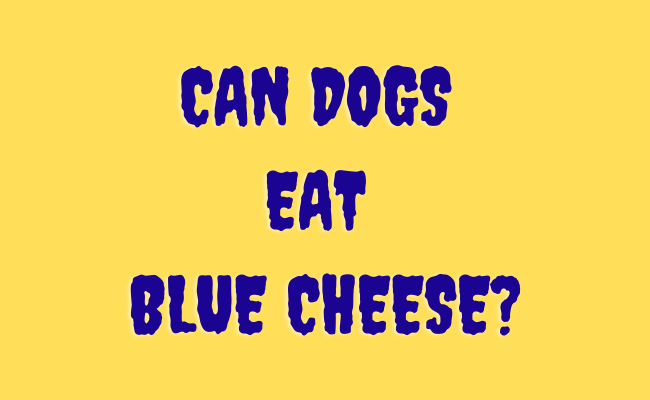 Can Dogs Eat blue cheese