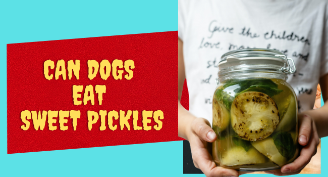 Can Dogs eat Sweet pickles