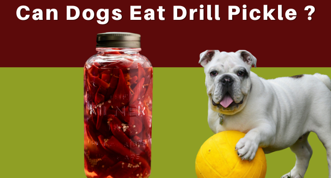 Can Dogs eat drill pickles