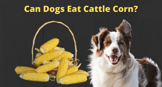 Can dogs eat cattle corn