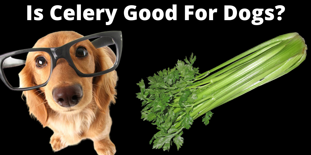 Is Celery Good For dogs