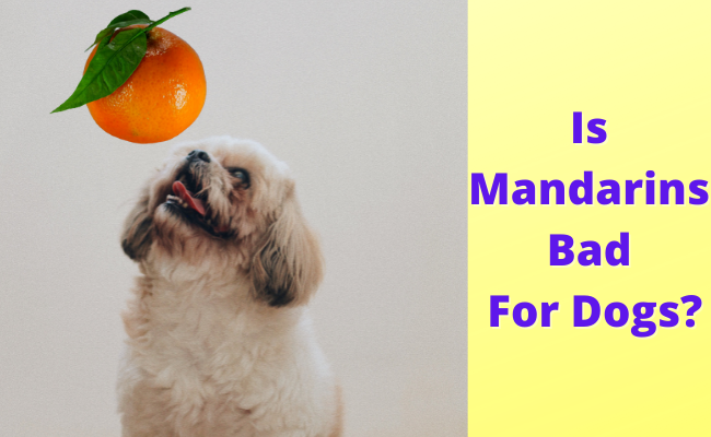 Is Mandarins Bad For Dogs