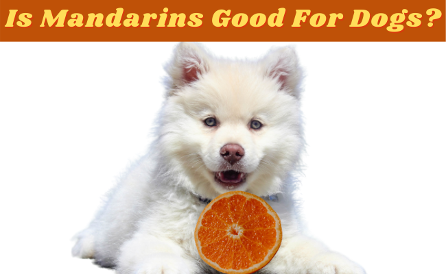 Is Mandarins Good For Dogs