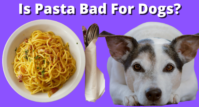 Is Pasta Bad For Dogs