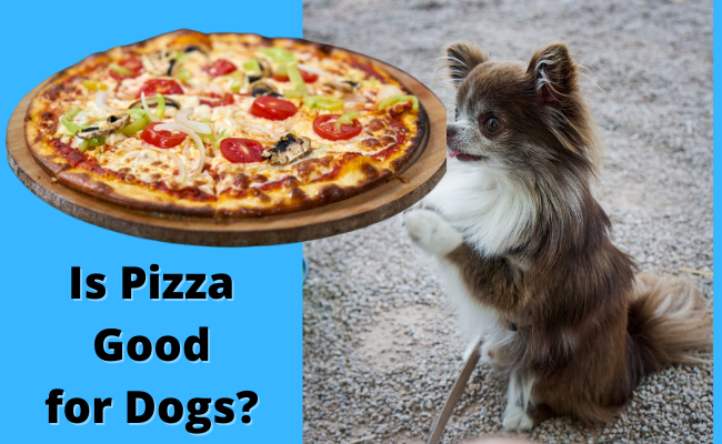 Is Pizza Good for Dogs