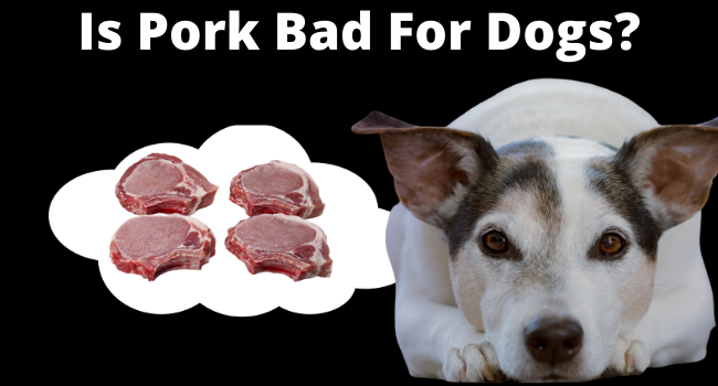 Is Pork Bad for Dogs