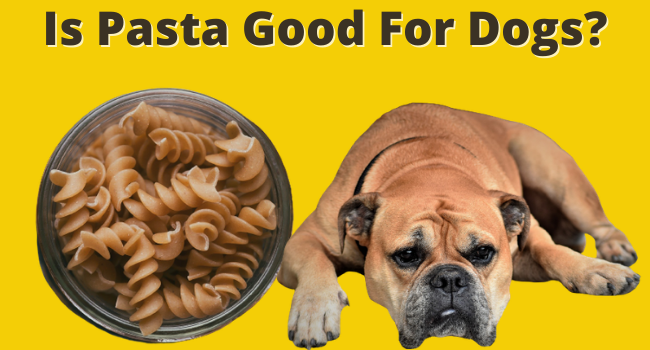 Is pasta good for dogs