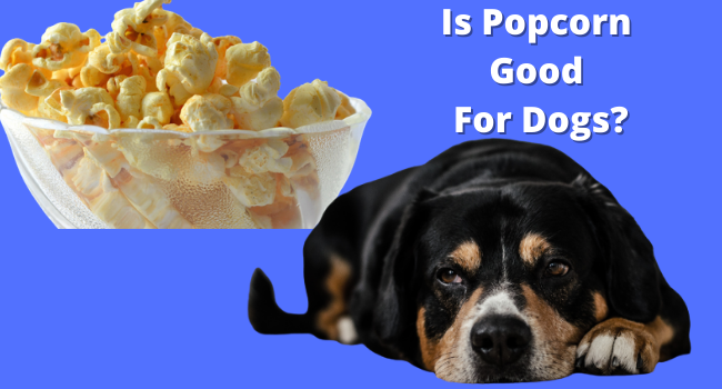 Is popcorn good for dogs
