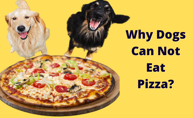 Why Dogs Can Not Eat Pizza